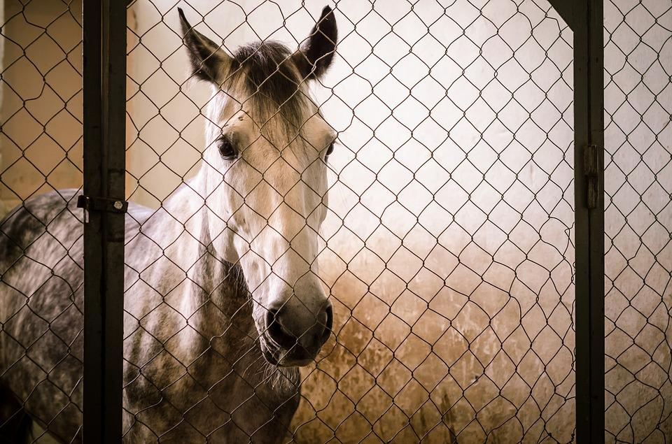 Cage, Fence, No One, Animals, One, Portrait, Fencing