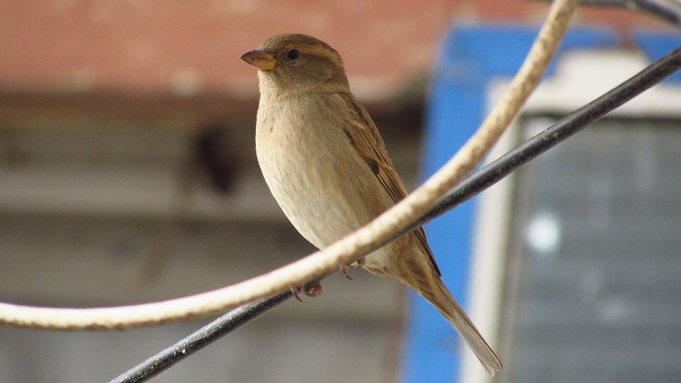 Nature, Birds, No One, Outdoor, Wildlife