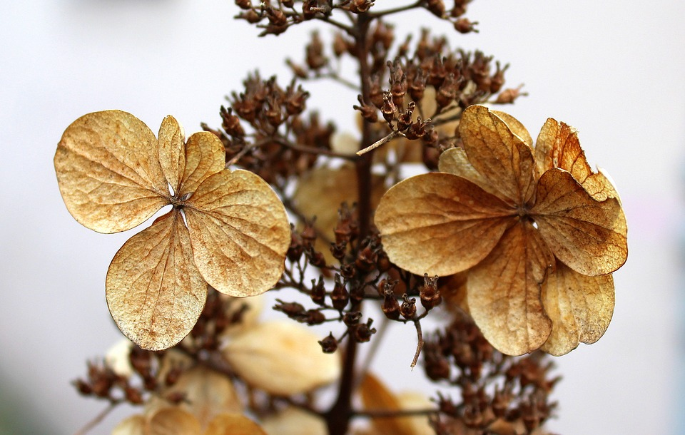Dry Flowers, Winter, Nature, Plant, Leaf, No One
