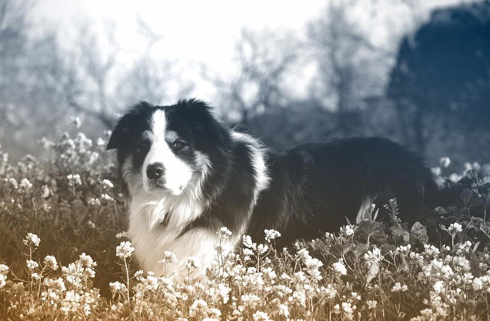 Dog, Canine, Mammal, Animal, Nature, Pet, No Person