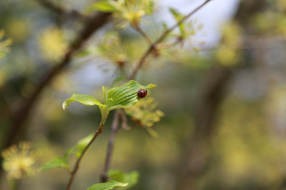 Noel Online Gift Shop, Nature, Plants, Leaf, Outdoors