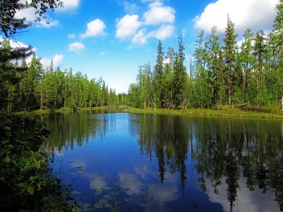 Nature, Forest, Trees, Water, North, Landscape, Plant