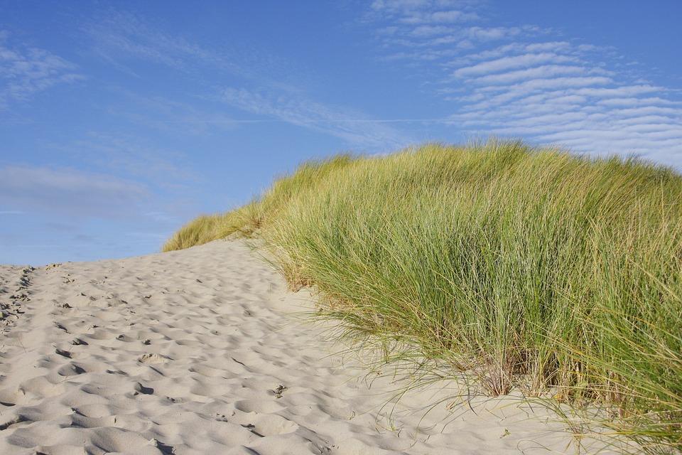 Beach, Dune, Grass, North Sea, Coast, Dune Grass