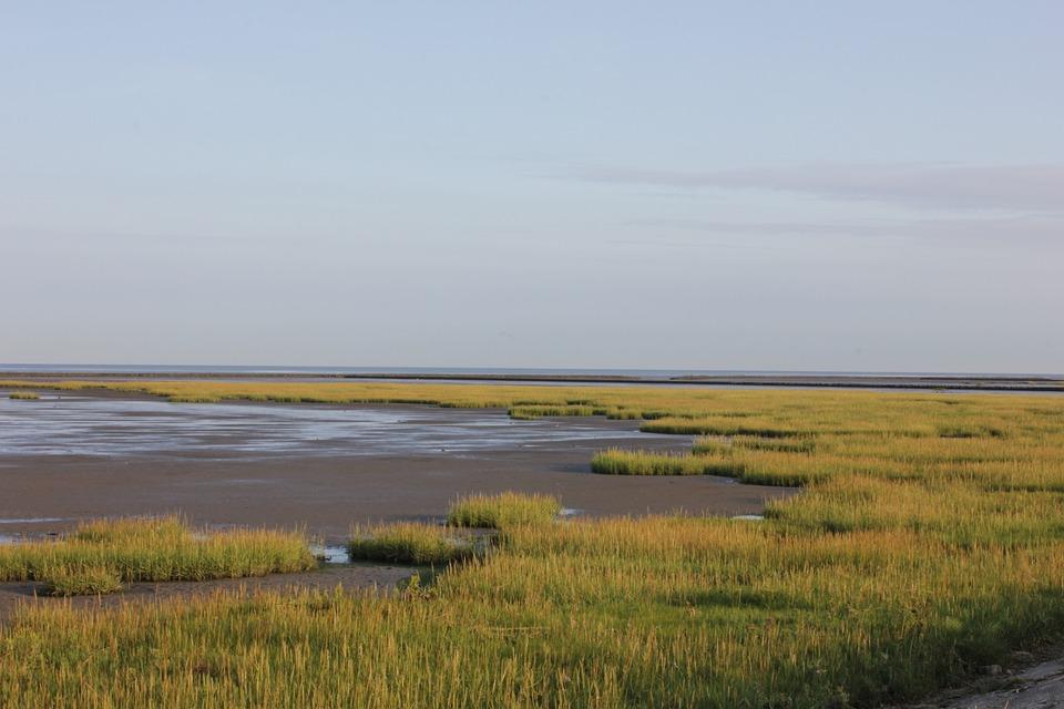 Watts, North Sea, Grass, Wadden Sea, Beach