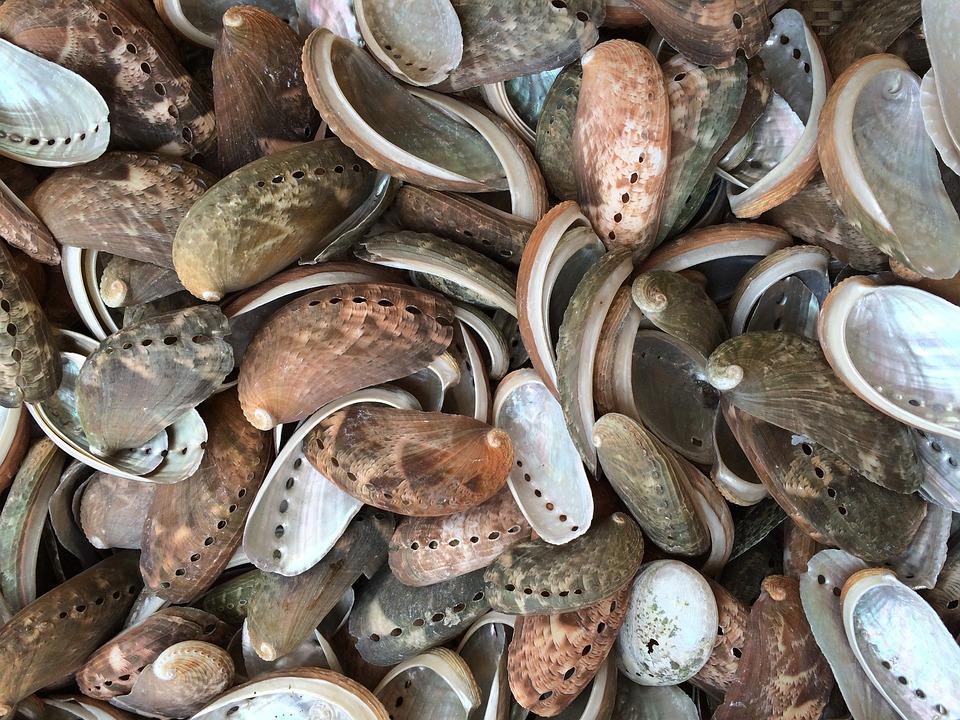 Mussels, North Sea, Sea Animals, Mussel Shells, Flotsam