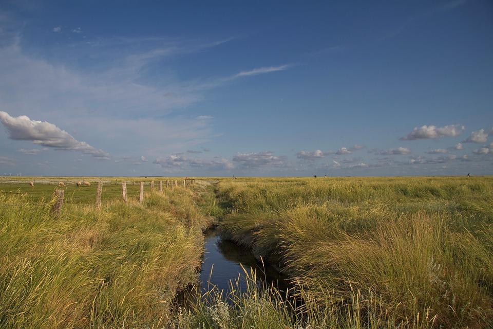 Hamburger Hallig, Wadden Sea, North Sea, Salt Meadow