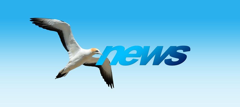 News, Northern Gannet, Animal World, Bird, Fly, Freedom