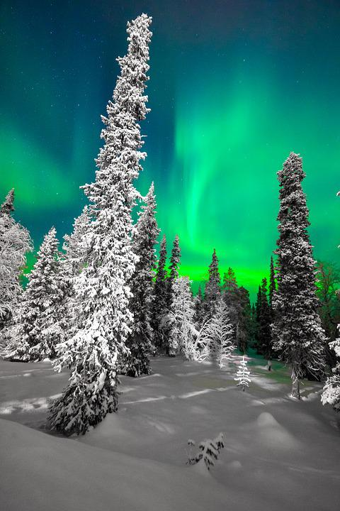 Tree, Nature, Winter, Cold, Northern Lights