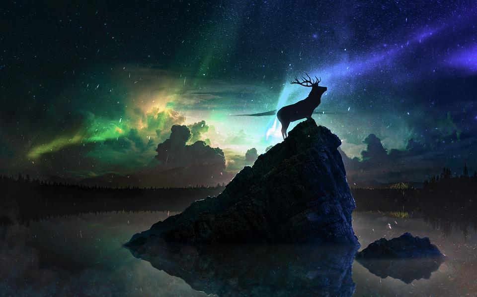 Deer, Rock, Horns, Northern Lights, Night, Mountain
