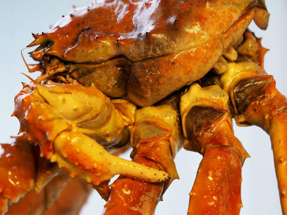 Cancer, Fish, Creature, King Crab, Norway, Crab, Sea