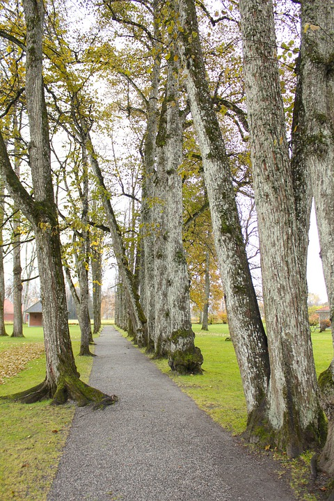 Norway, Trees, Grass, Park, Walkway, Sidewalk, Canopy