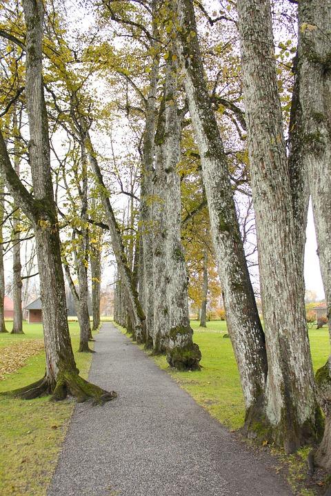 Norway, Trees, Grass, Park, Walkway, Sidewalk, Canopy