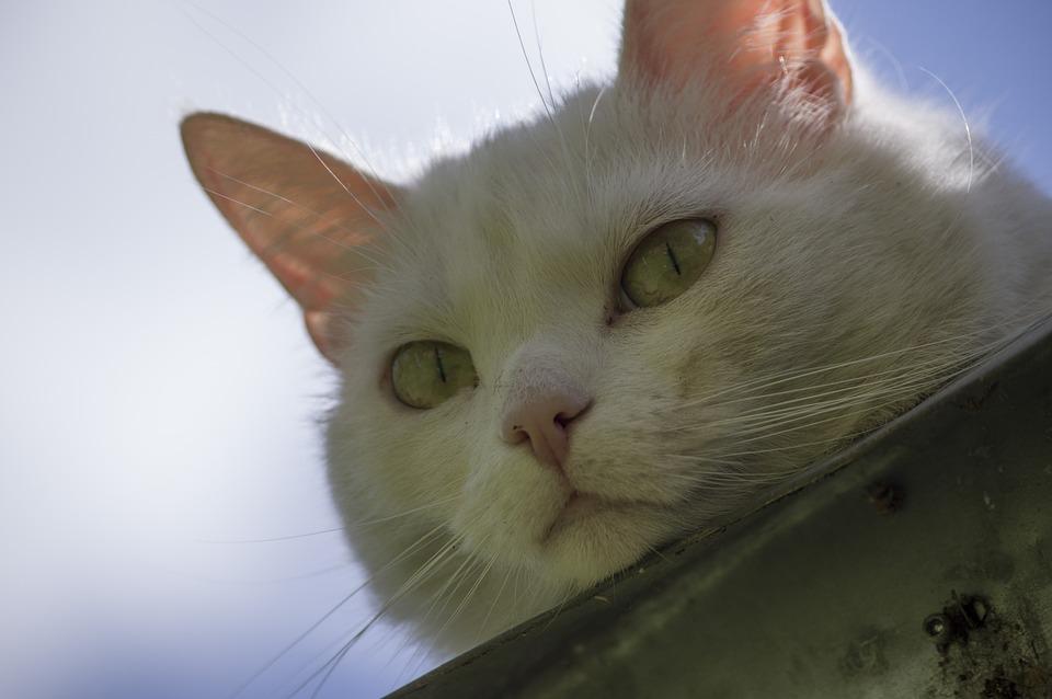 Cat, Cute, Animal, Pet, Domestic, Gutter, Fun, Nose