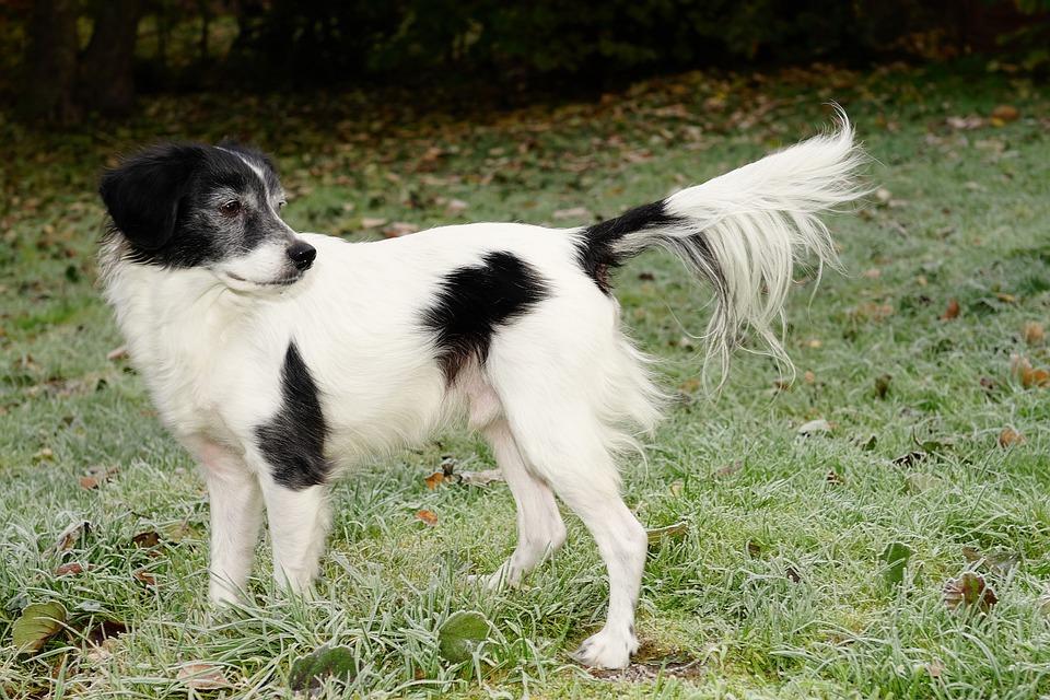 Dog, Pet, Male, Garden, November, Frost, Noble