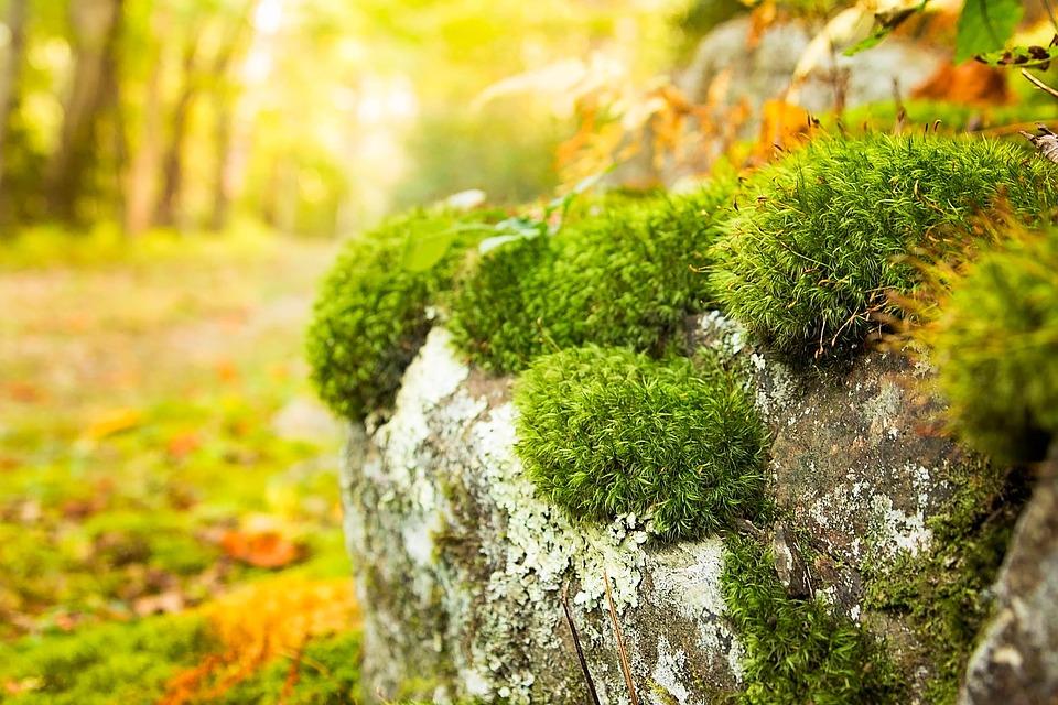 Autumn, Fall, Woodland, November, October, Foliage
