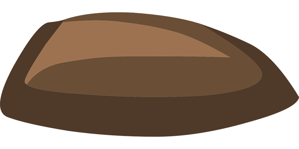Seed, Nut, Brown, Oval, Growing, Natural, Stone, Pebble