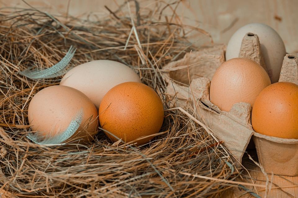 Chicken Eggs, Hay, Chicken Product, Nutrition, Food