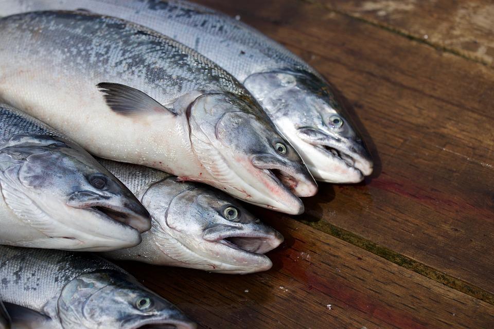 Salmon, Fish, Food, Nutrition, Japanese, Dinner