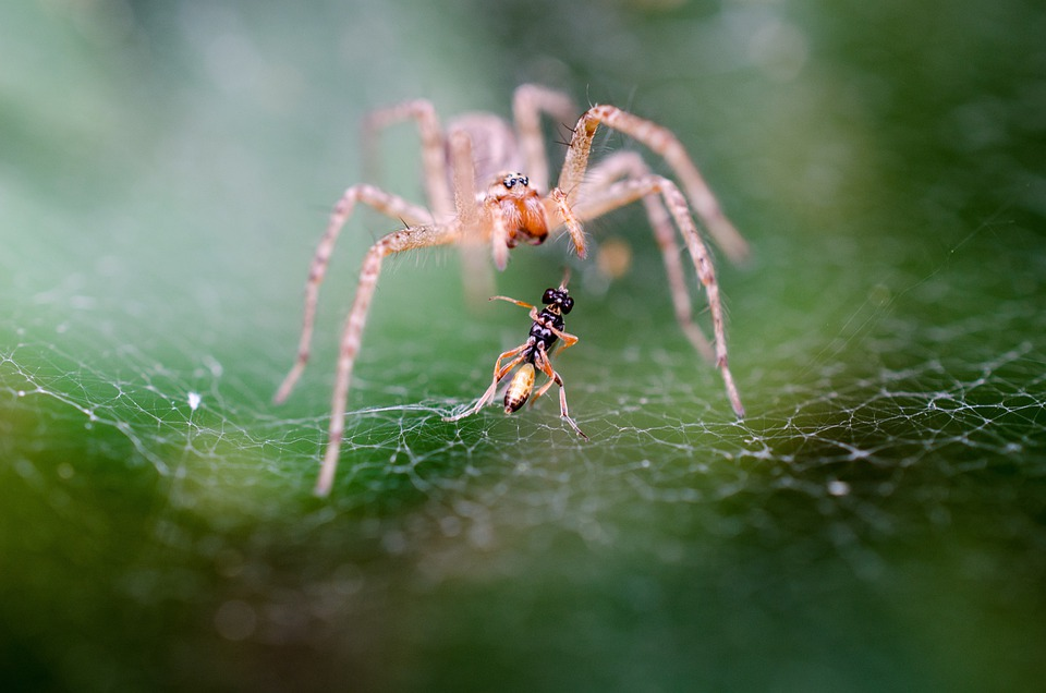Spider, Macro, Fight, Nutritional Supplements