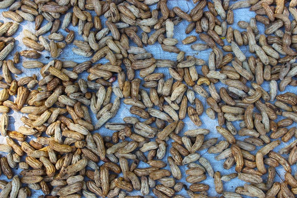 Peanuts, Shells, Food, Snack, Nut, Healthy, Nutshell