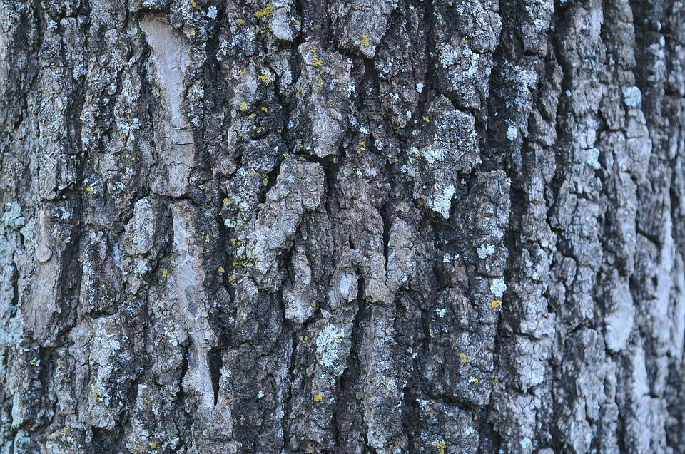 Oak, Wood, Texture, Bark, Tree Trunk