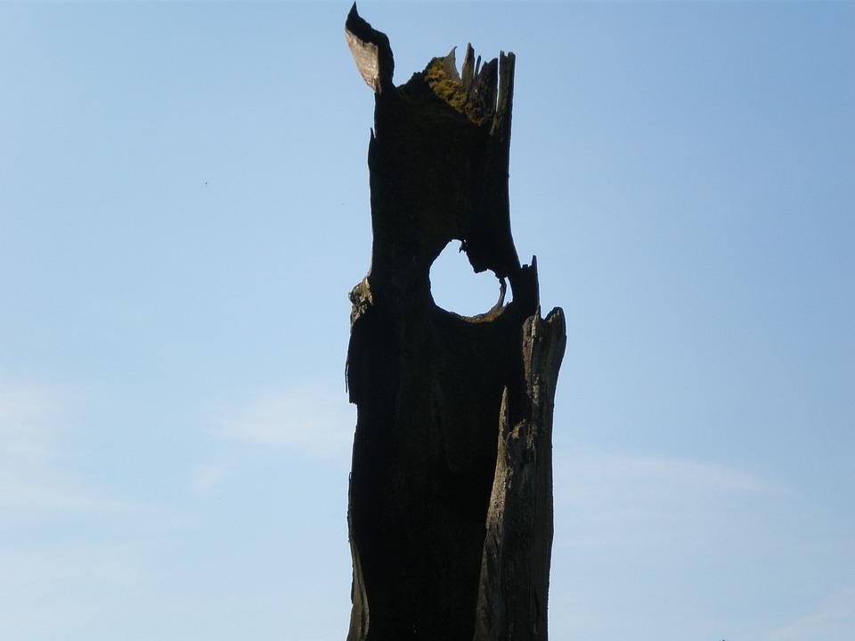 Oak, Hollow Stem, Sky Watcher, Eye, Sky Blue