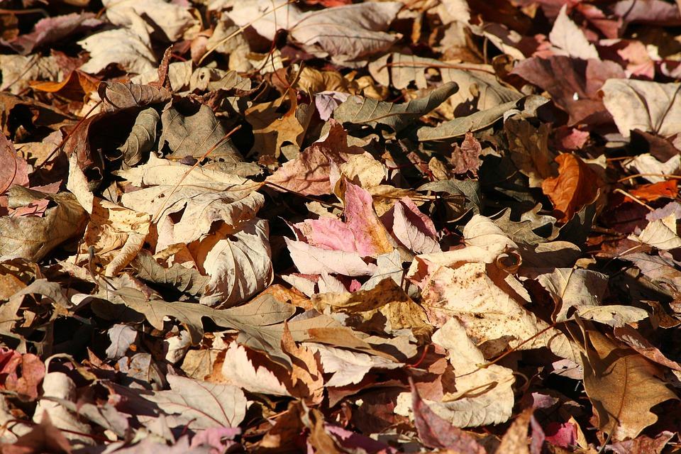 Fallen Leaves, Autumn, Forest Floor, Oak, Maple, Poplar