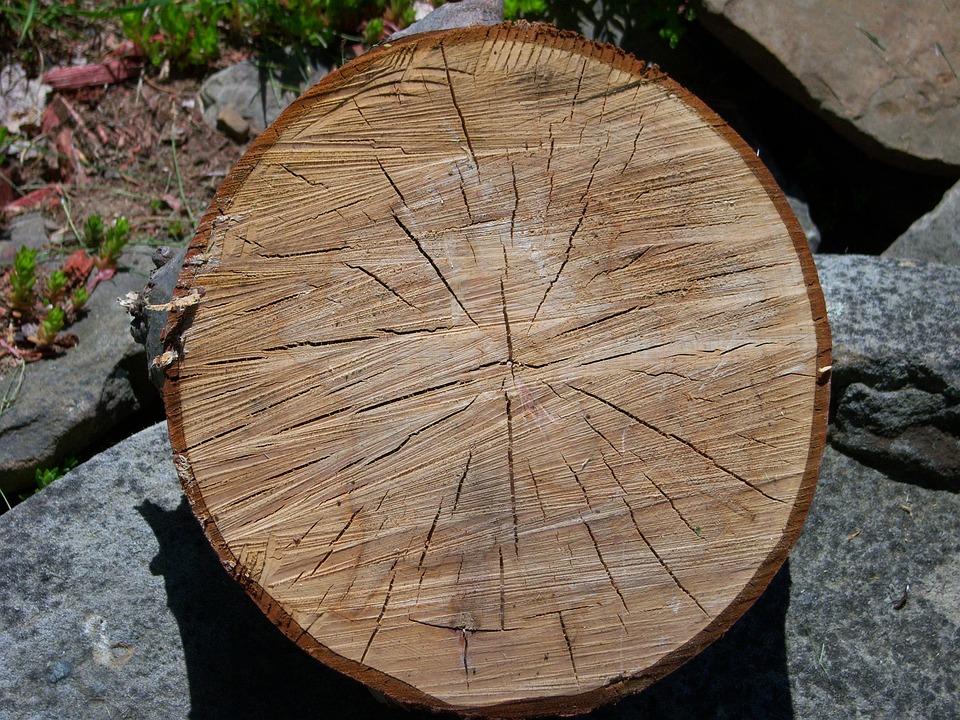 Oak, Tree, Slice, Old, Round, Nature, Still, Life