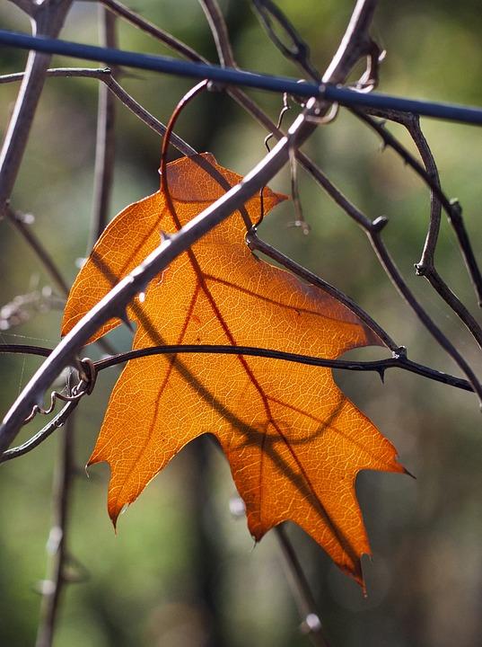 Leaf, Oak, Autumn, Yellow
