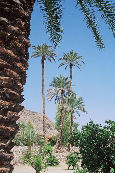 Oasis, Desert, Vegetation, Source, Watering Hole