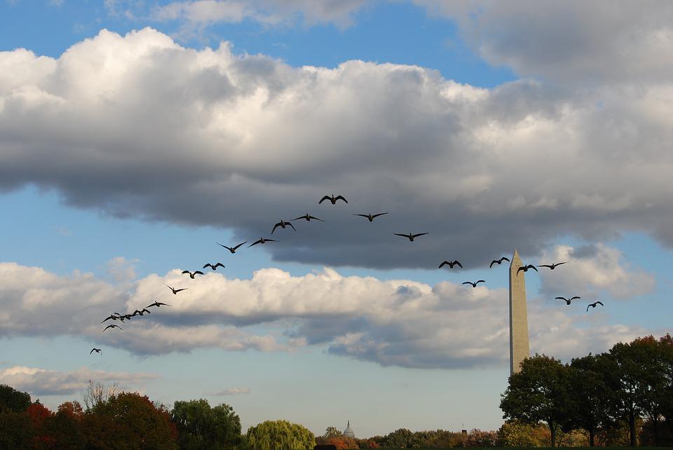 Birds, Training, Flight, Sky, Cloud, Obelisk