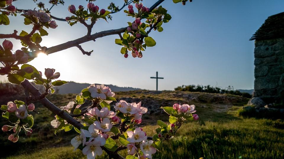 Villefort, Occitanie, Fleurs, Flower, France, Occitania