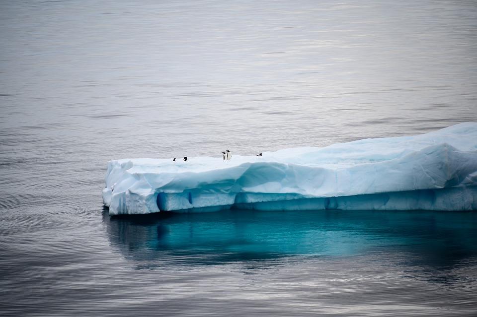 Antarctica, Iceberg, Ice, Arctic, Cold, Penguins, Ocean