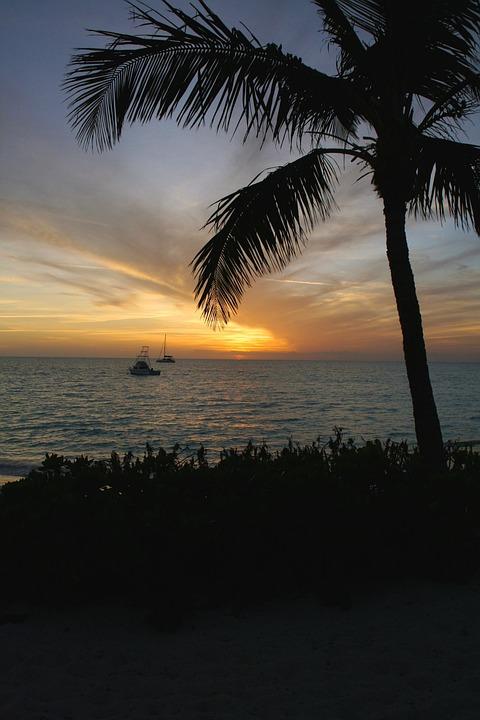Palm Tree, Tropic, Bahamas, Ocean, Caribbean, Water