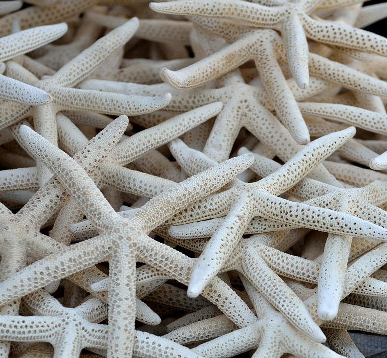 Starfish, Shell, Sea Life, Beach, Ocean, Wildlife