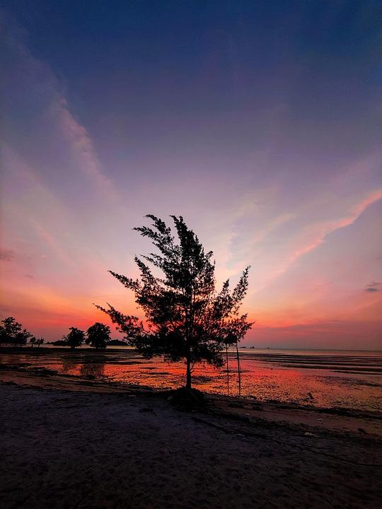 Beach, Sunset, Nature, Tree, Sky, Clouds, Sea, Ocean