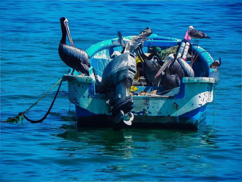 Boat, Pelicans, Sea, Ocean