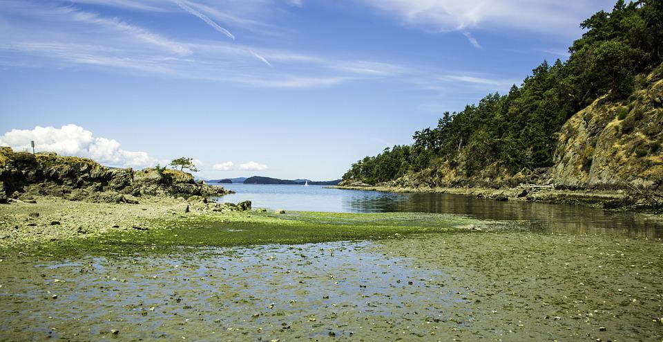 Clams, Flats, Sea, Beach, Mud, British Columbia, Ocean