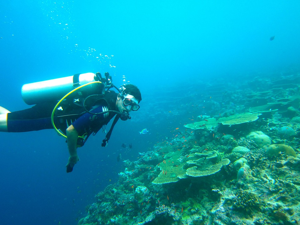 Diving, Maldives, Sea, Ocean, Diving Suit, Deep Diving