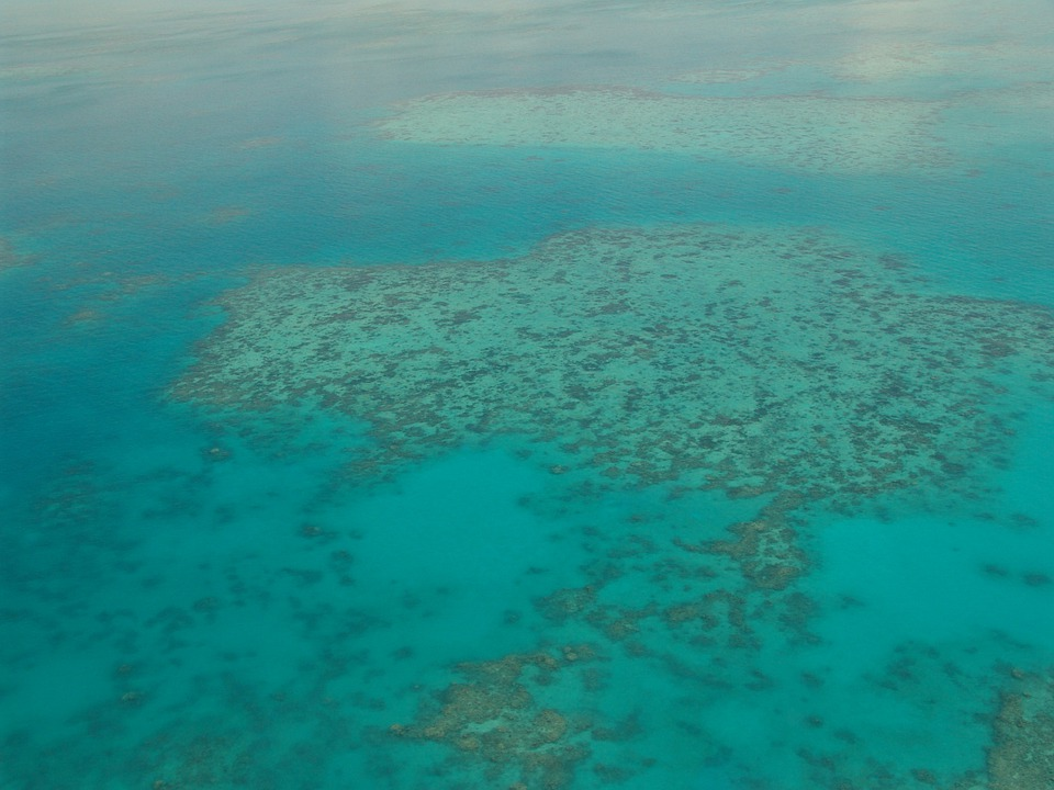 Great Barrier Reef, Diving, Coral, Ocean, Pacific