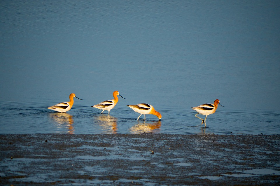 Duck, River, Swamp, Four, Cute, Ocean