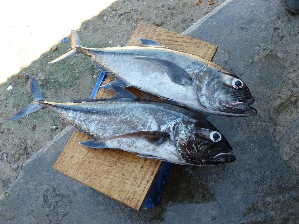 Fish, Fischer, Fishing, Catch Fish, Ocean, Market, Food