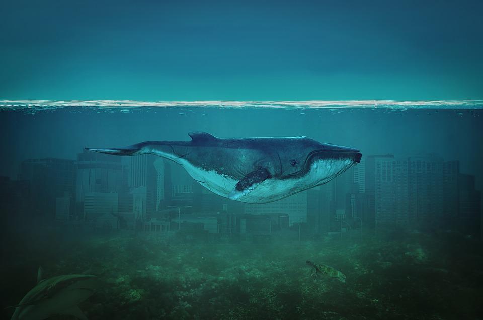 Wal, Sea, Blue, Nature, Water, Marine Mammals, Ocean