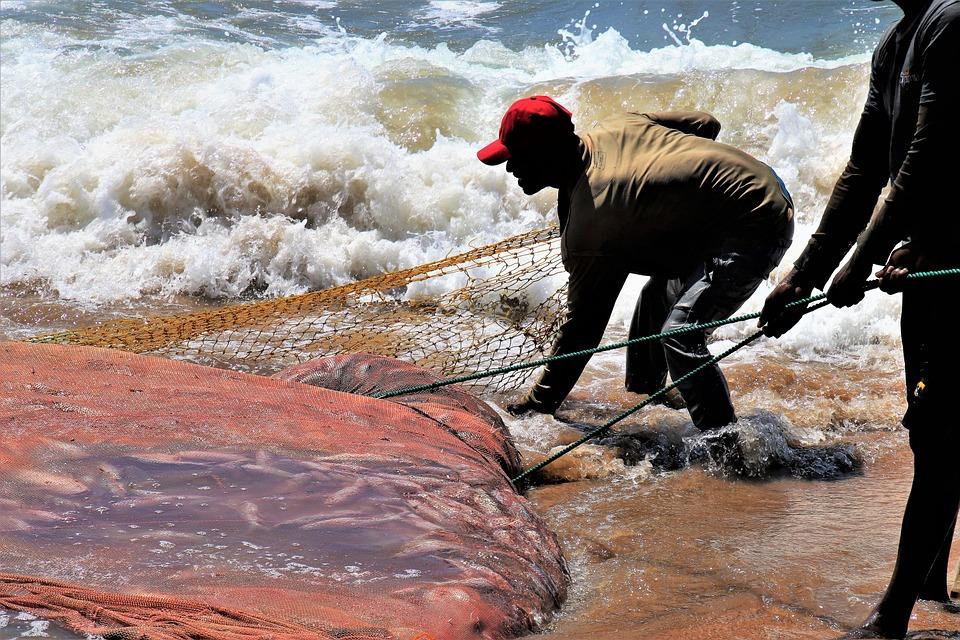 In The Water, Ocean, The Fisherman, Network, Fish, Work