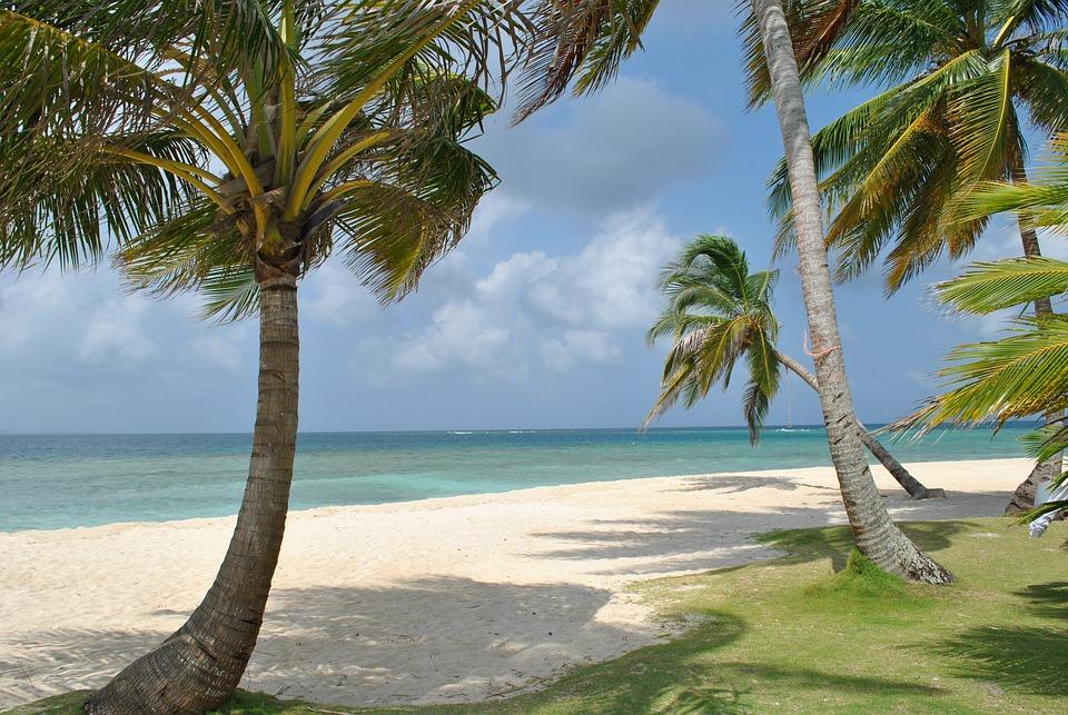 Nature, Beach, Sea, Landscape, Ocean, Tree, Palms
