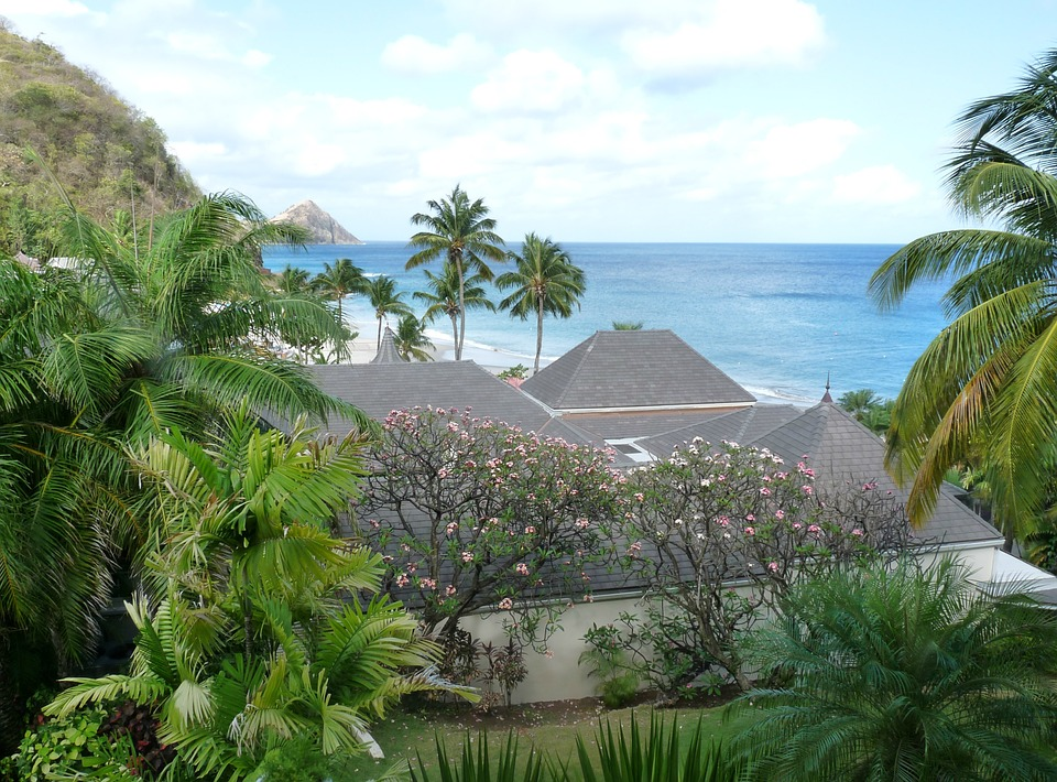 Sea, Ocean, Palm, Palm Tree, Vacation, Romantic