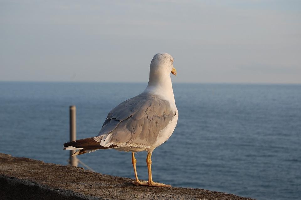 Sea, Waters, Beach, Ocean, Costa, Seagull, 5 Terre