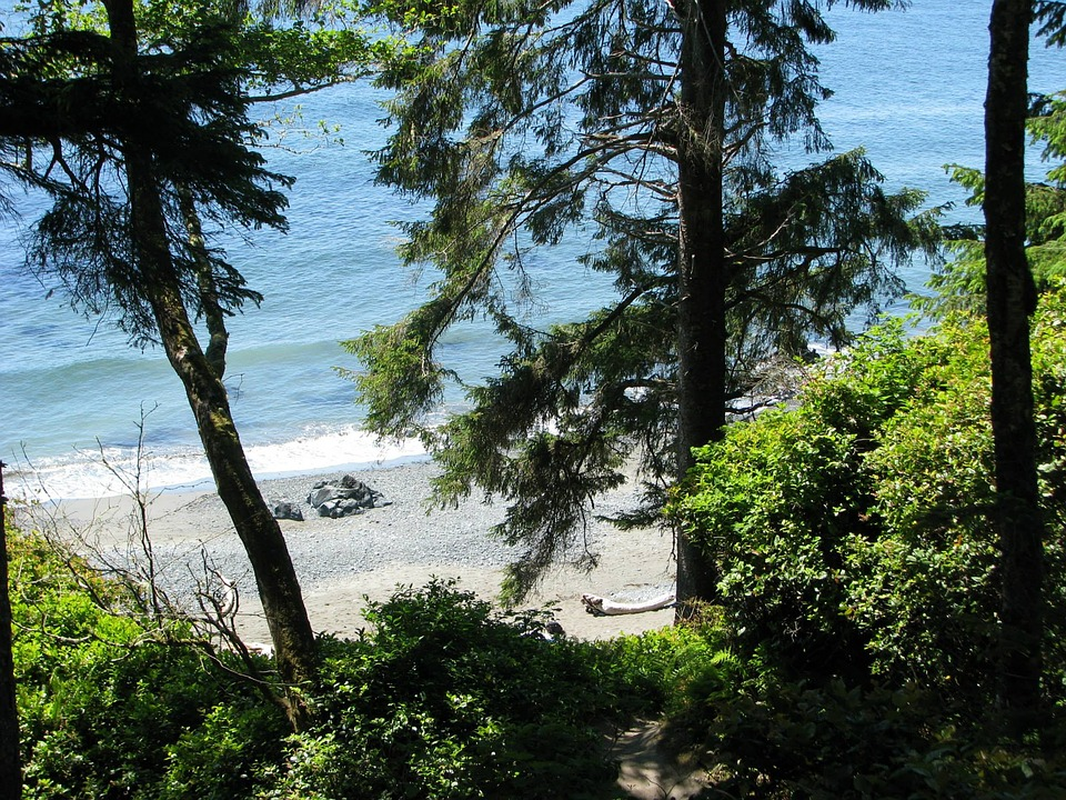 Victoria, Bc, Ocean, Beach, Trees