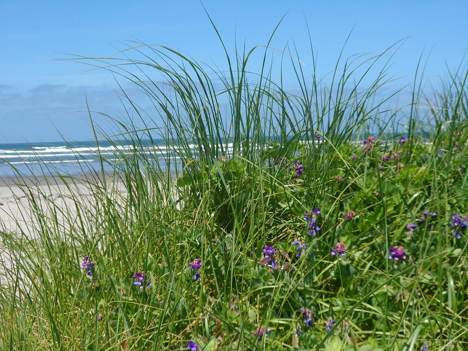 Sea Grass, Close-up, Ocean View, Flower, Nature, Ocean