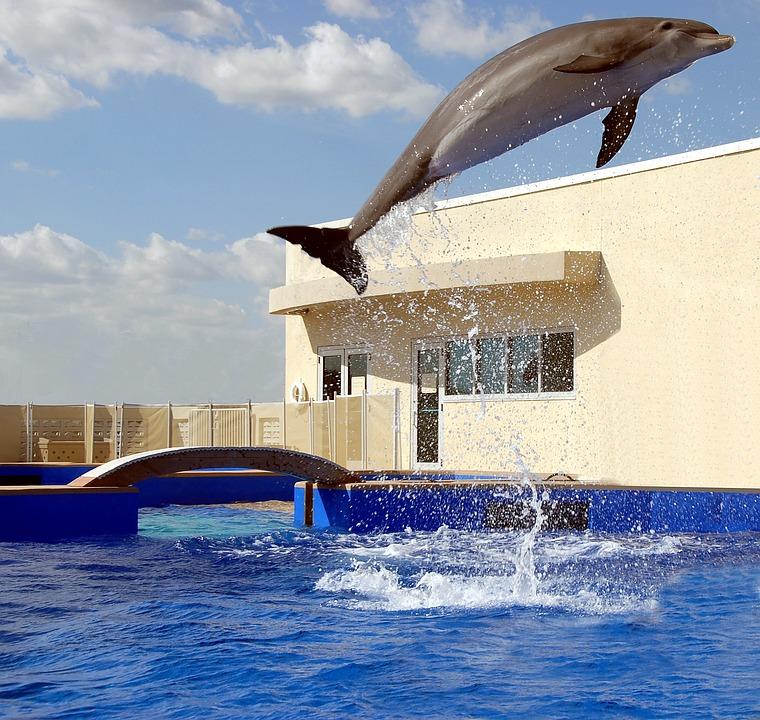 Dolphin, Jumping, Playing, Aquarium, Ocean, Water, Wild